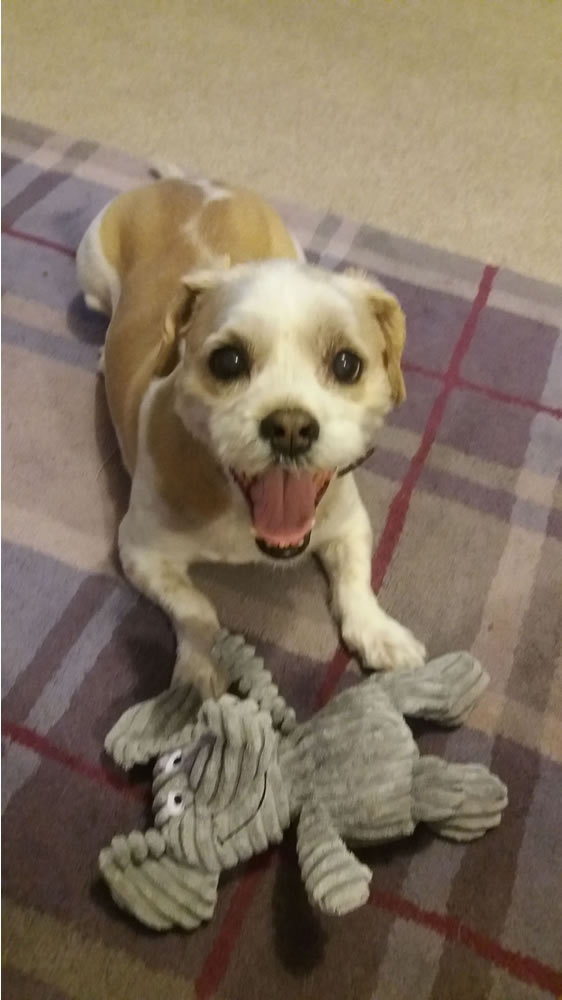 Nuneaton Dog Training Facebook